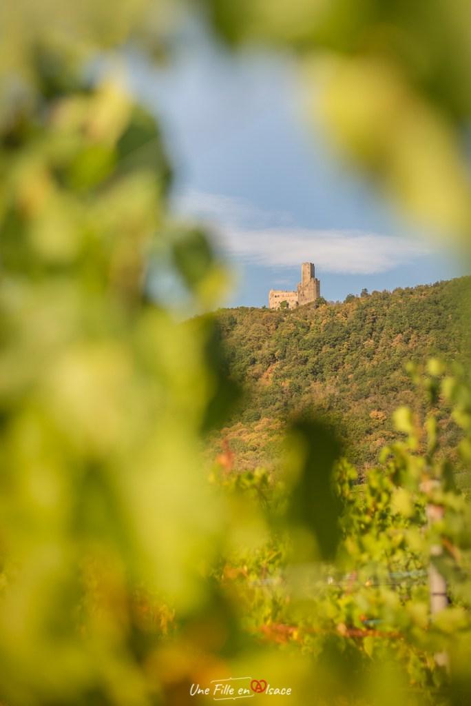 ortenbourg-vignoble-scherwiller@Céline-Schnell-Une-Fille-En-Alsace-2020