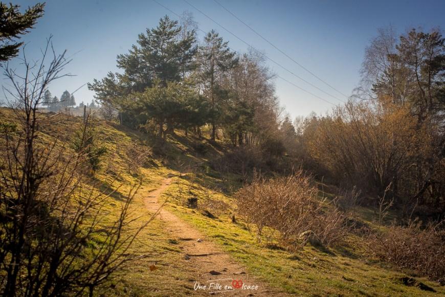 randonnee-piton-falkenstein-Grendelbruch@Céline-Schnell-Une-Fille-En-Alsace-2021