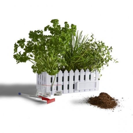 kit-jardin-de-bureau