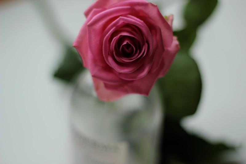 rose-bioderma