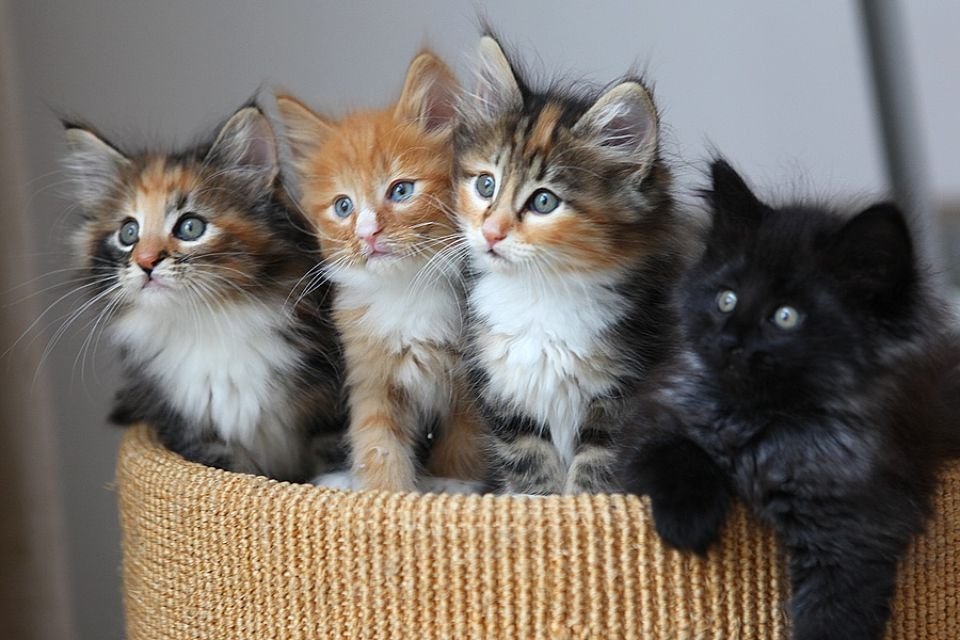 549697-chatons-mignons