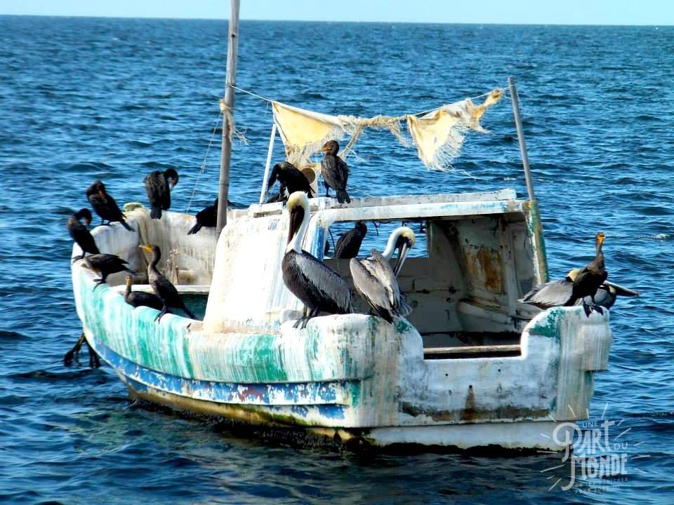 campeche bateau
