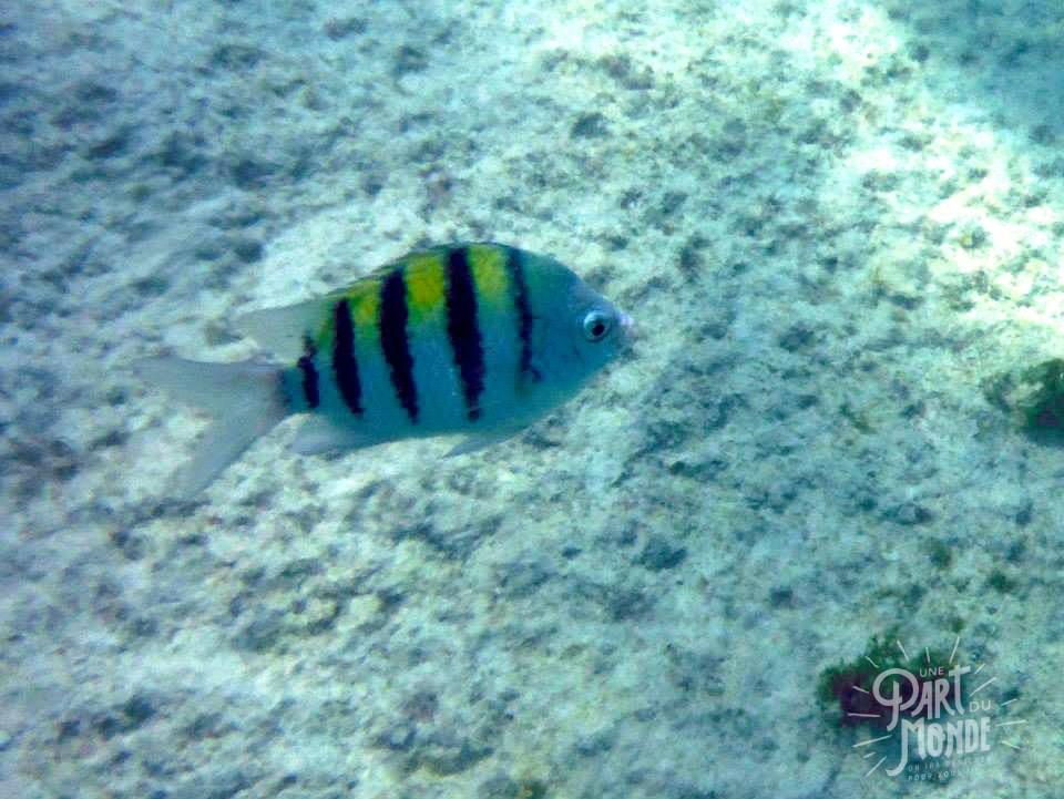poisson-raye