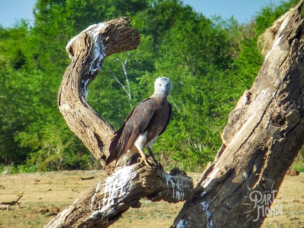 safari uda walawe aigle