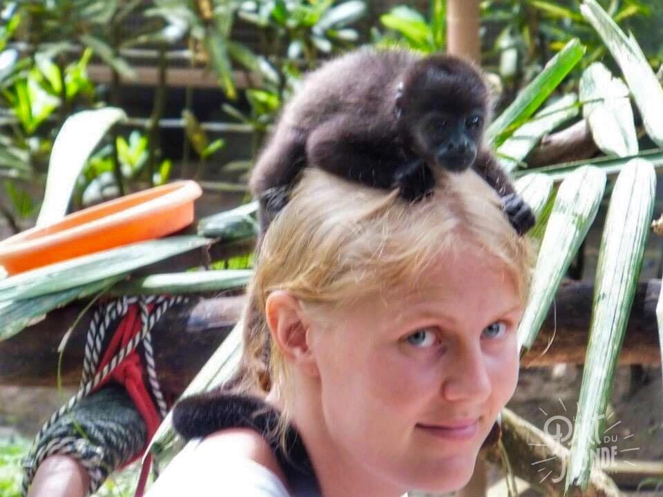 jaguar rescue center bébé singe tete