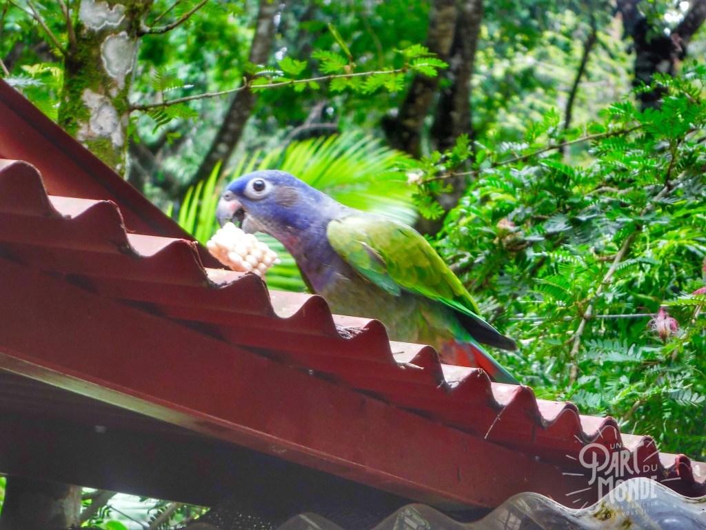 jaguar rescue center perroquet
