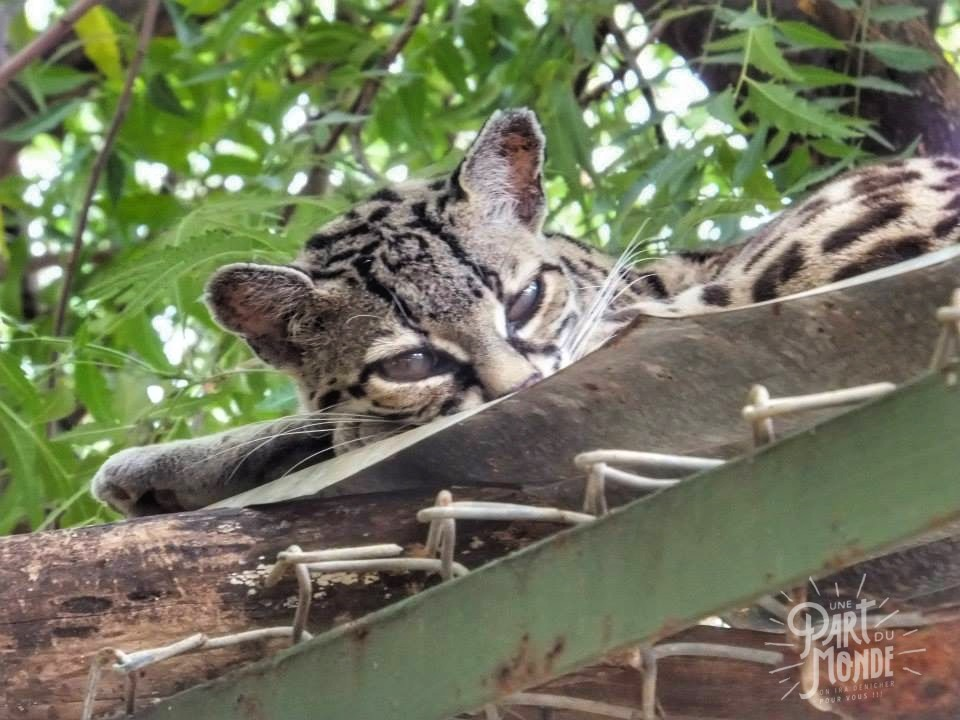 parc volcan tenorio rescate las pumas