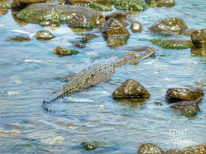 Costa Rica : Parc du Corcovado et Péninsule d'Osa