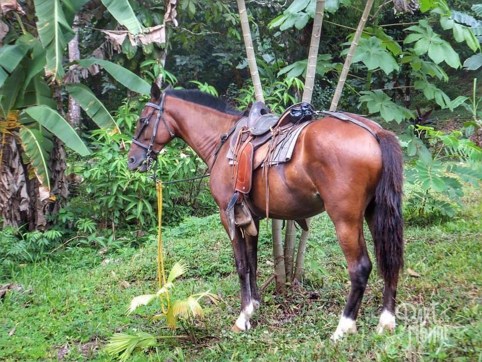 volcan poas cheval