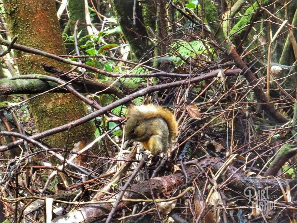 volcan poas écureuil