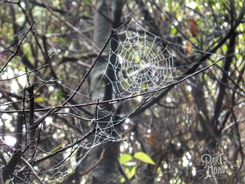 volcan poas toile d'araignée