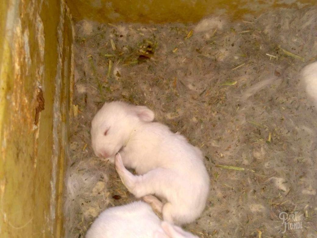 bébé lapin volontariat à mendoza