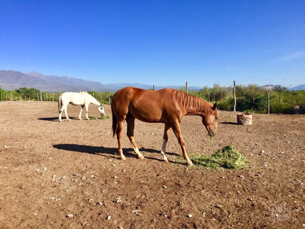 chevaux volontariat à mendoza