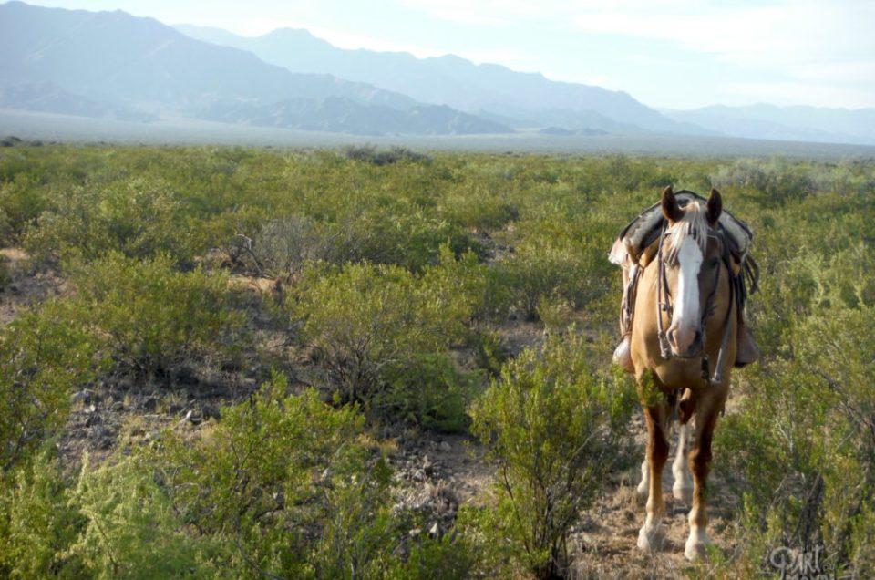 Volontariat à Mendoza : 2 semaines comme un gaucho dans un ranch