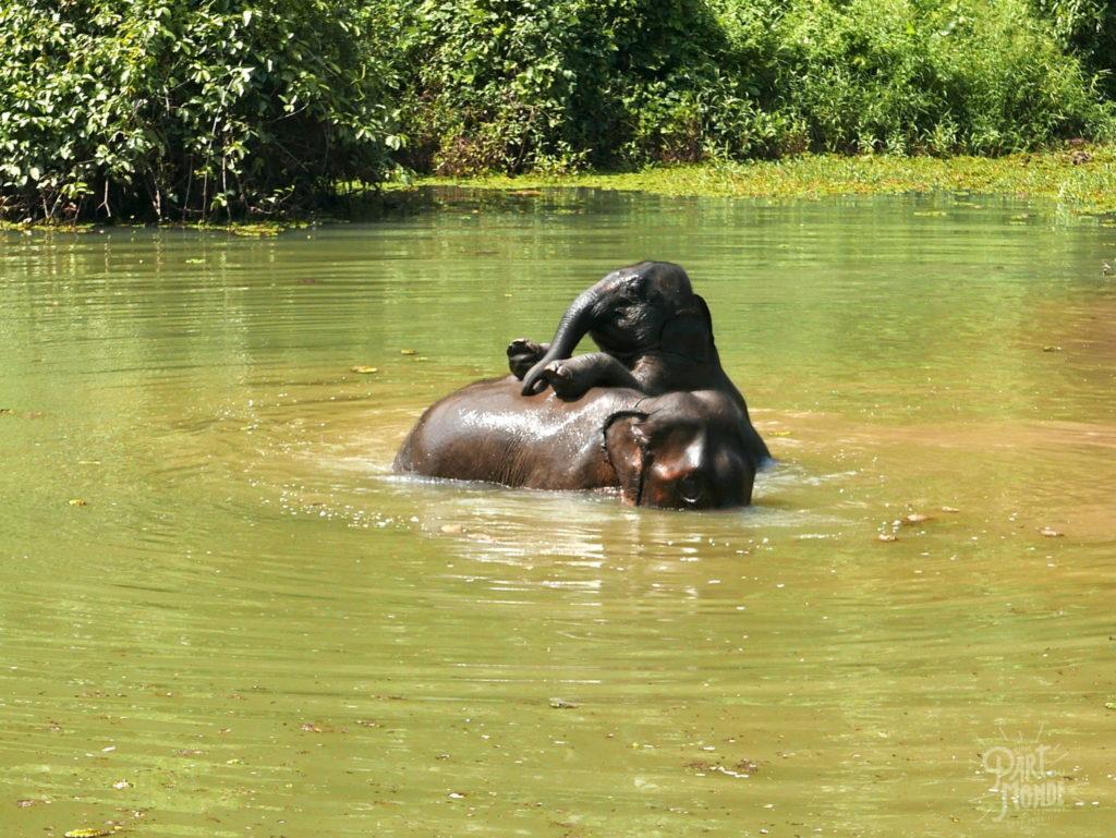 bébé et maman jouent elephant conservation center