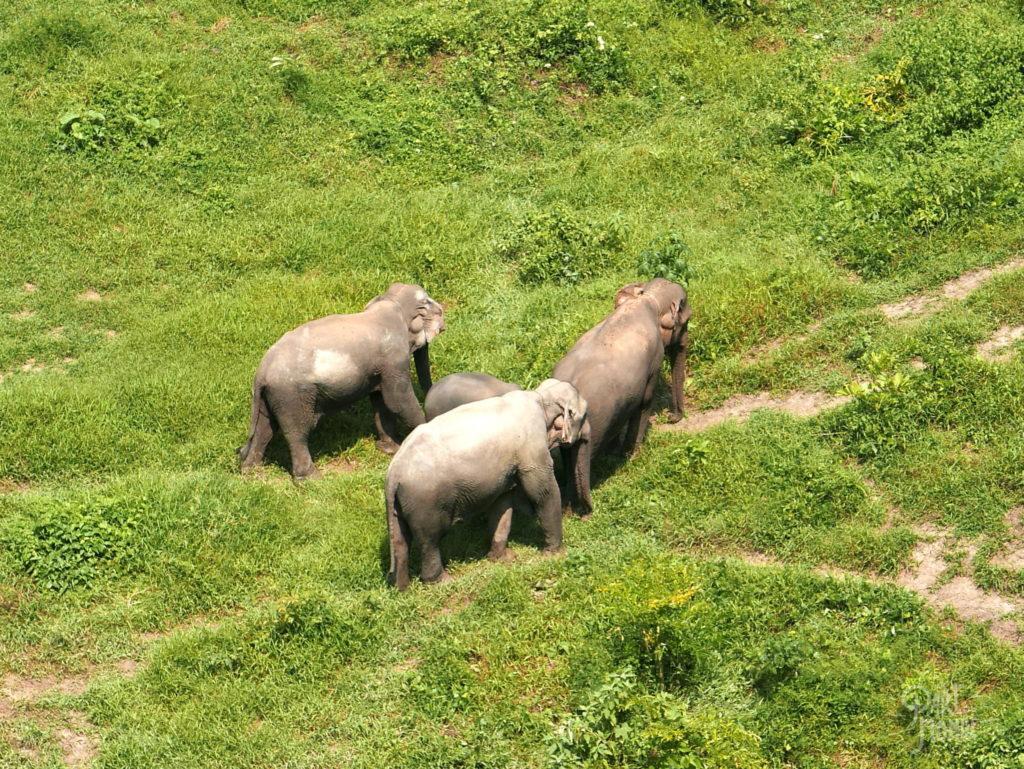elephant conservation center espace sociabilisation