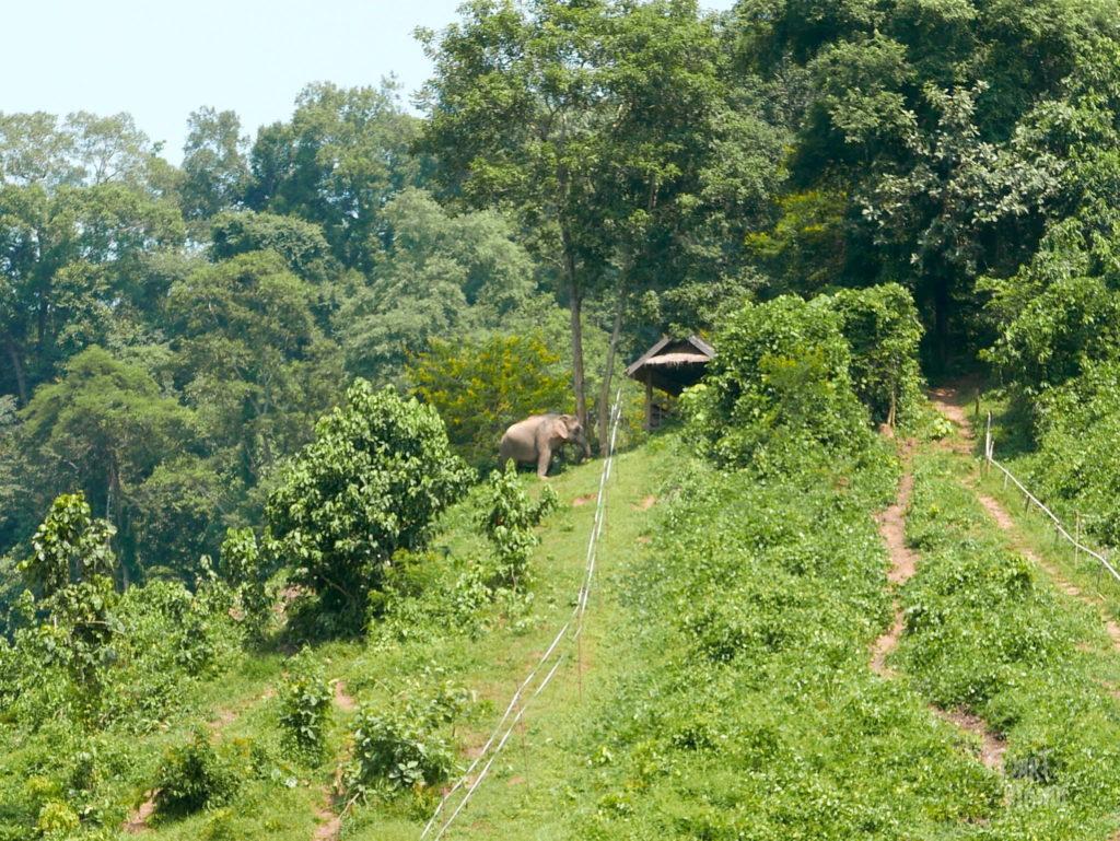 elephant conservation center nature