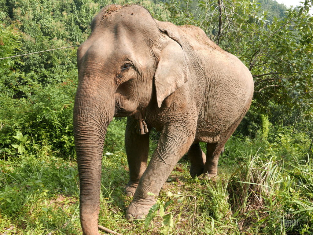 meadow elephant conservation center
