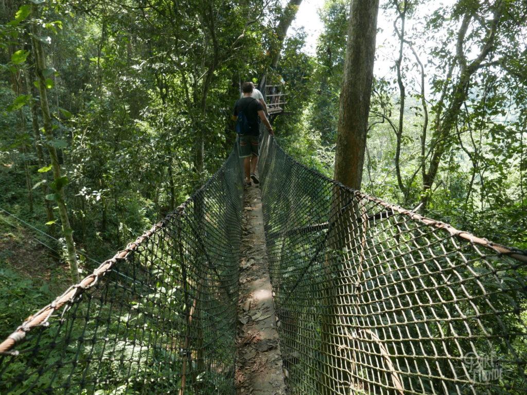 pont de singe elephant conservation center