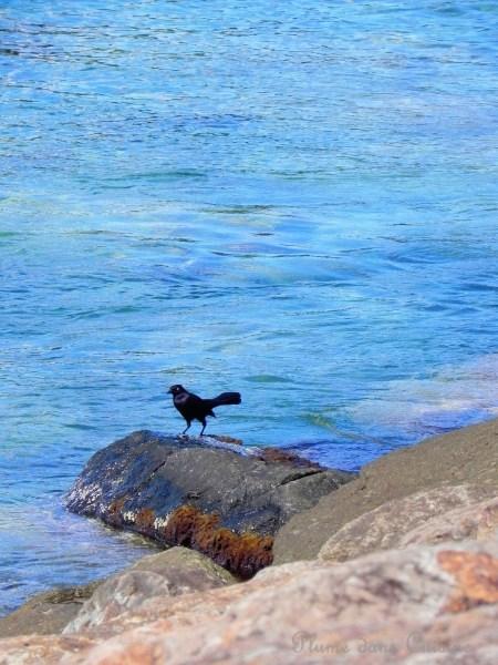 plages (5)