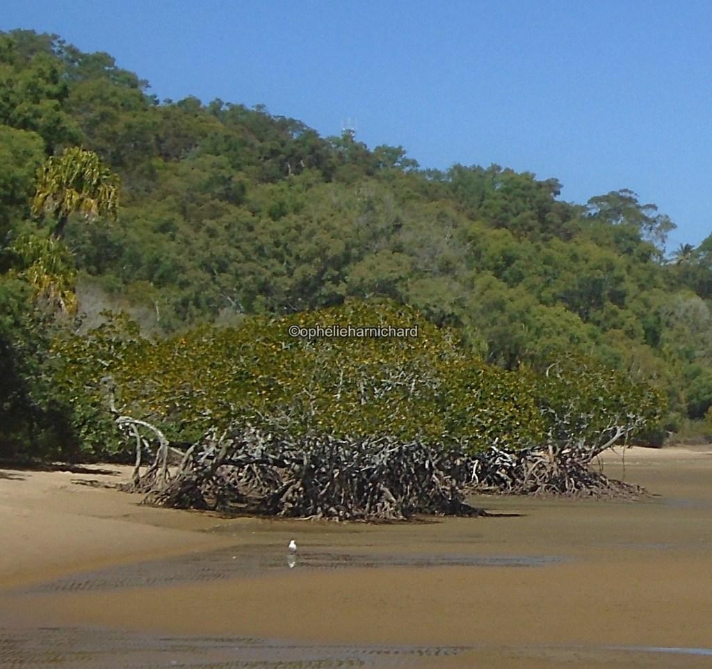 Photo of mangroves