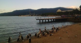 Photo: wildlife on the shore,