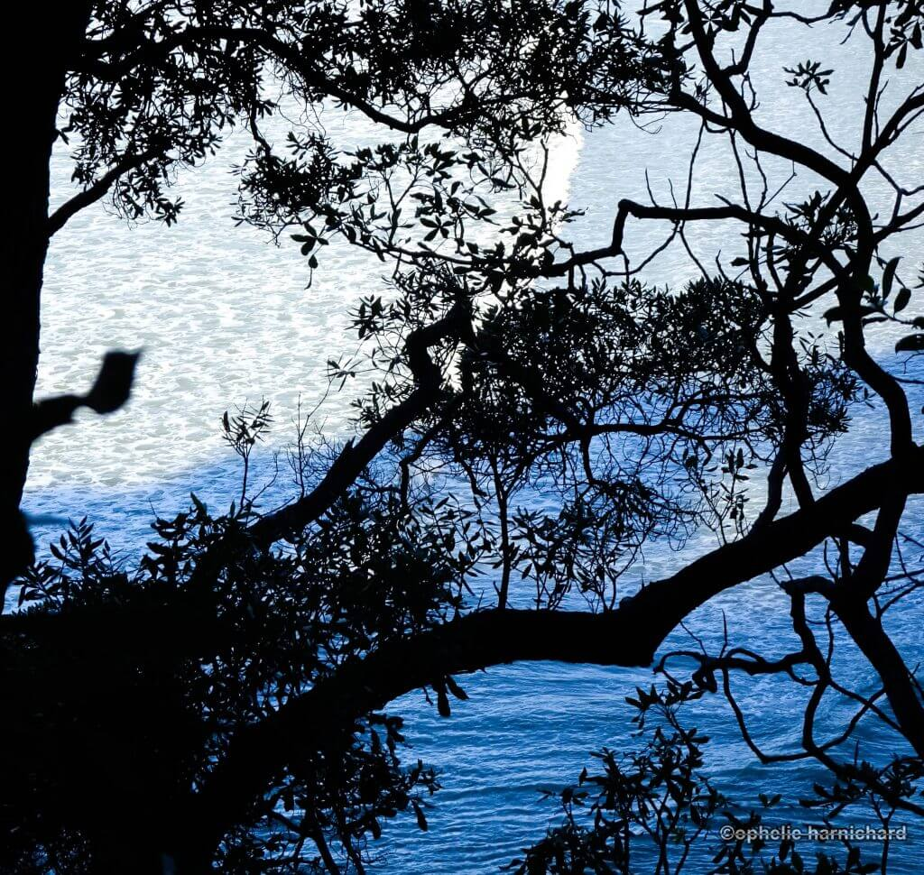 Artistic-photography-blue-black-tree-sea
