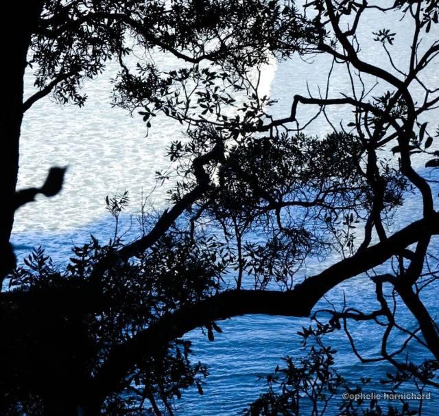 Artistic-photography-blue-black-tree-sea