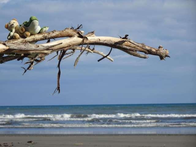 Photo-fun-things-to-do-NZ