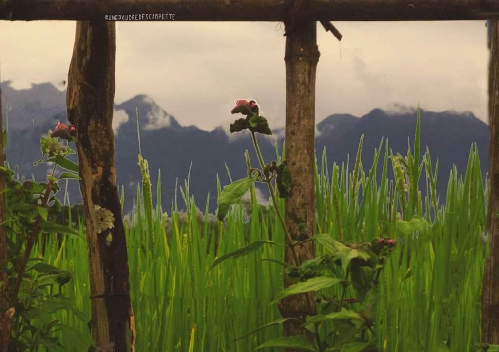 Photography_trip_ideas_VangVieng_Laos_rice_field