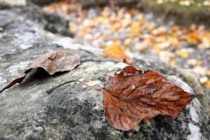 dry-leaf-2893501_960_720