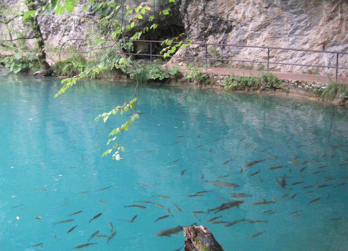 Forellen in helderblauw meer.