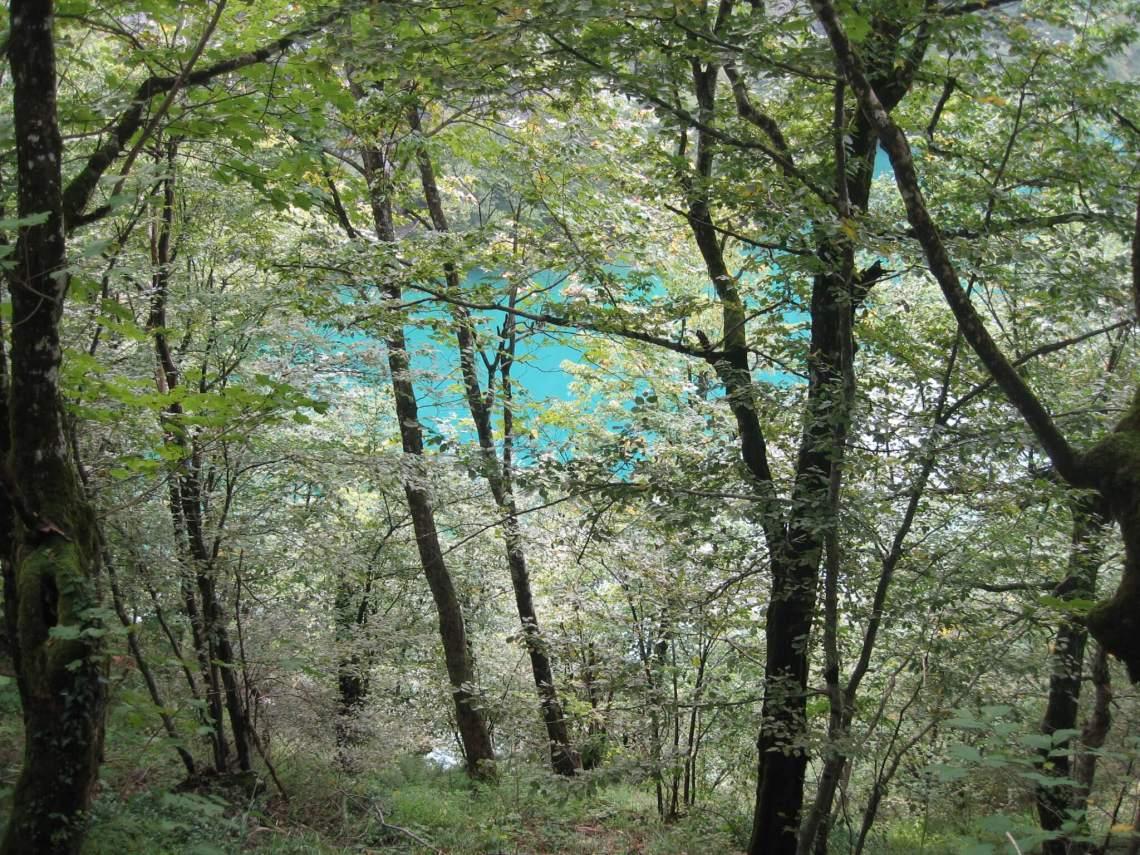 Tussen roze bloesem en groene bladeren is blauw meer zichtbaar