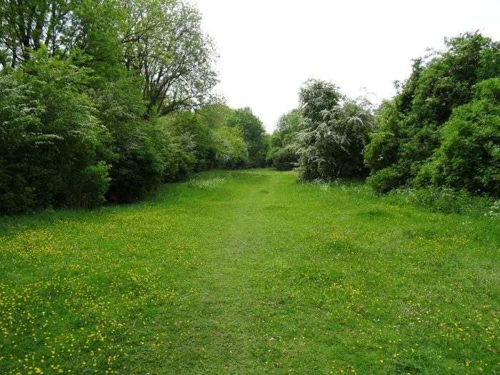 grasveld met bosschages dat leidt naar bezoekerscentrum Spiennes