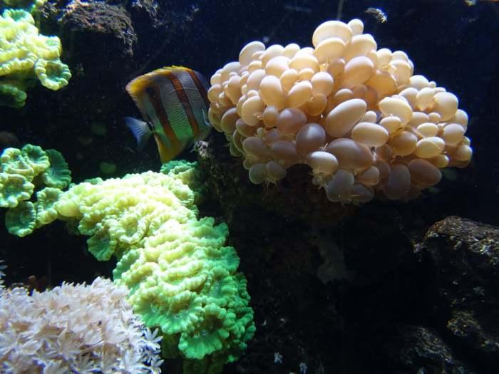 Prachtig koraal en kleurrijke vissen, de onderwaterwereld op zijn best