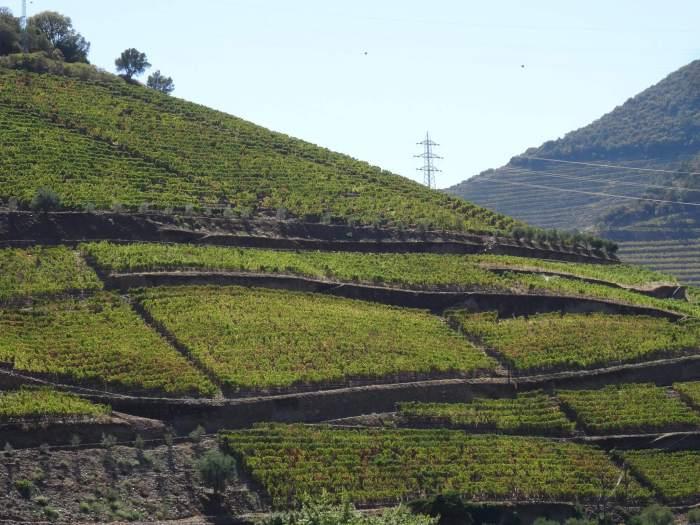 Groene golven wijn op de heuvels van Alto Douro