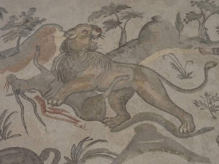 Leeuw verschalkt antilope in villa Romana del Casale