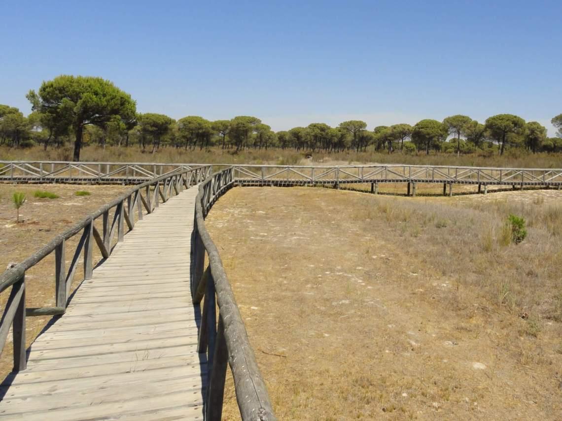 Houten vlonders leiden de weg in natuurpark Doñana