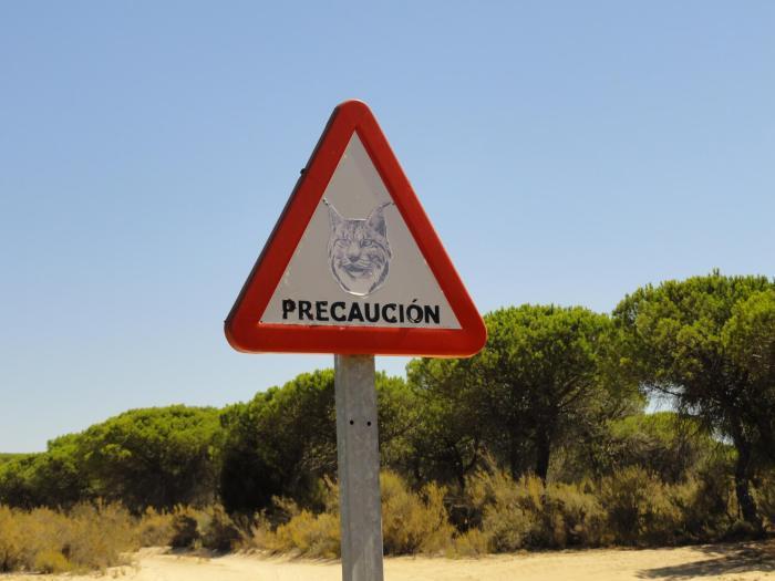Verkeersbord dat waarschuwt voor overstekende Iberische lynxen