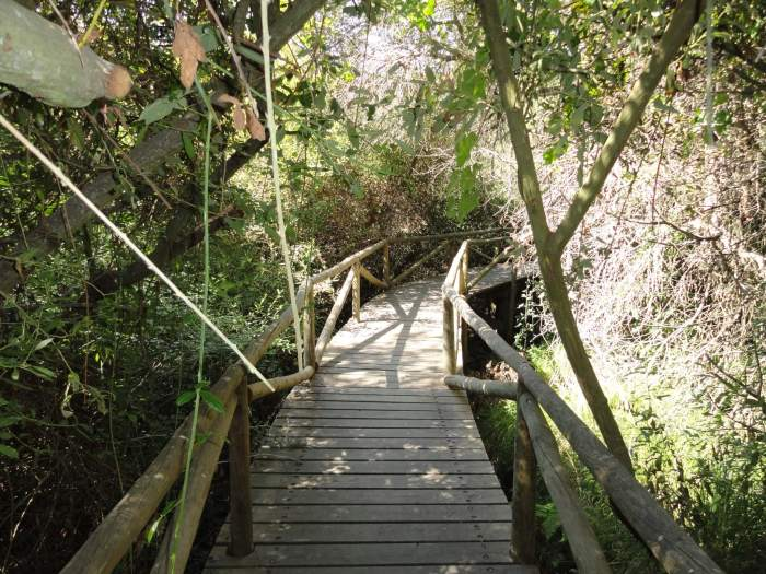 Overhangende doornentak boven houten vlonder in natuurpark Doñana