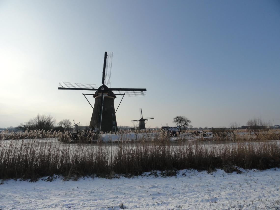 Rietkragen en molens in Kinderdijk
