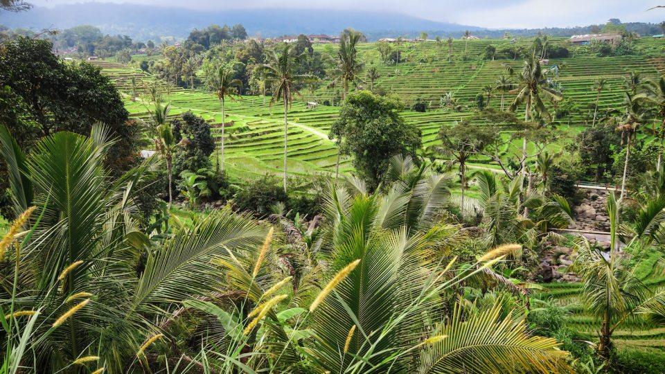 Paysage vert des rizières de Jatiluwih à Bali