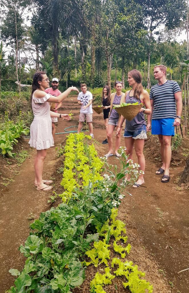 Élèves en train de cueillir des légumes dans le potager de Pemulan Farm à Bali