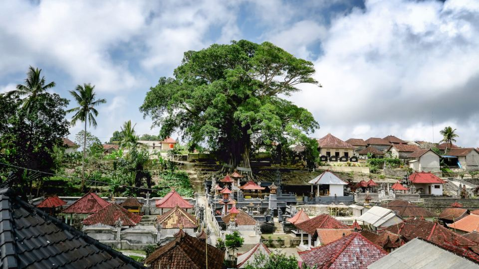 Arbre sacré centenaires à Nusa Penida, Bali