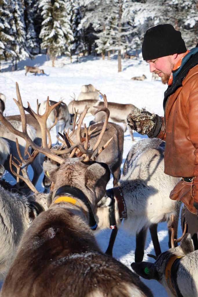 Éleveur de renne en Laponie finlandaise