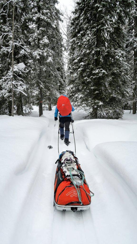 Randonnée en raquettes et Pulka en Laponie