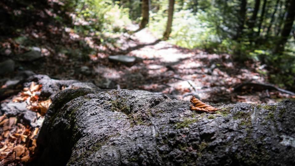 Souche d'arbre dans la forêt du Mont Aiguille