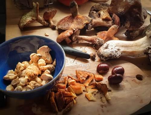 Résultat d'une cueillette de champignons : cèpes, pieds de moutons, lactaires délicieux sur une planche