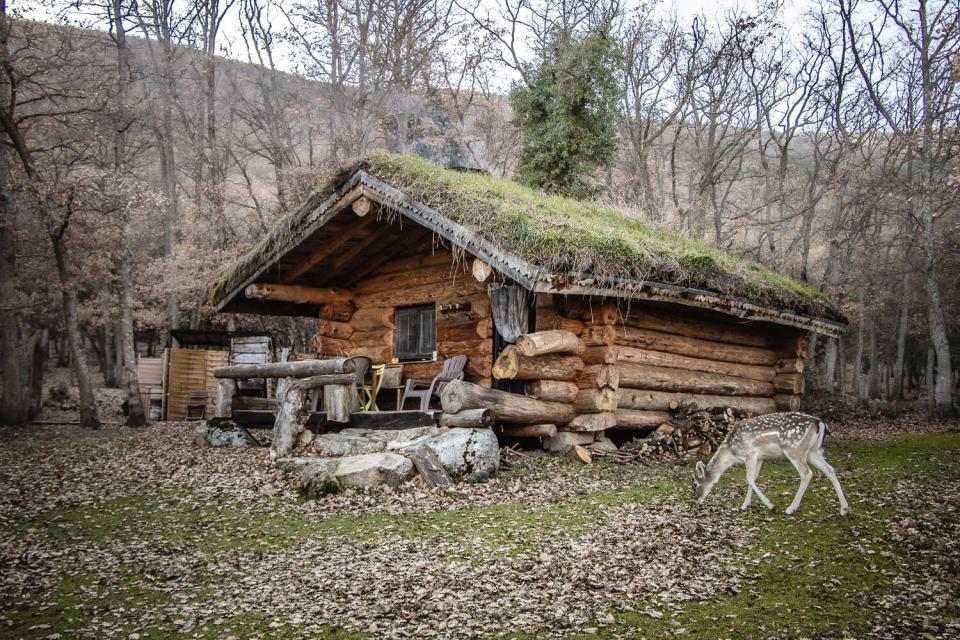 La cabane dans les bois avec une biche devant