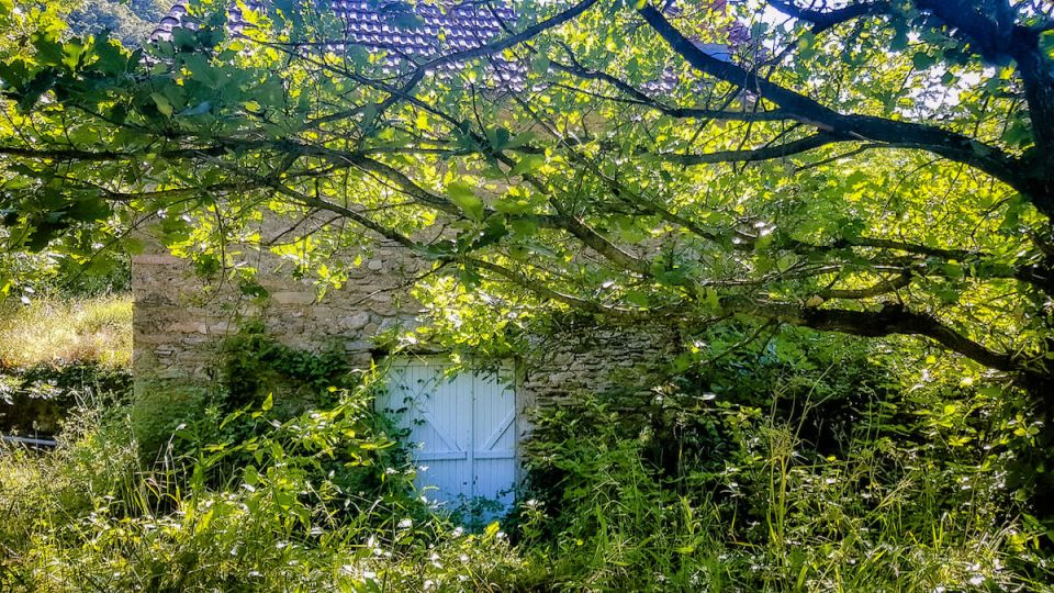 La porte-fenêtre du mazet et le chêne qui surplombe la terrasse